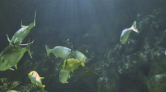 Fish swiming in a large aquarium 4K Stock Footage