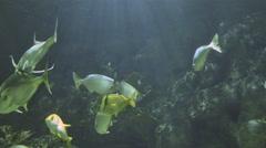 fish swiming in a large aquarium 4K - stock footage