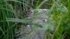 The wood stream to a grass flows. Stock Footage
