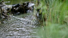 The wood stream to a grass flows 2. - stock footage