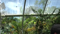 Malaysia Penang island 031 butterflies under a glass roof Stock Footage