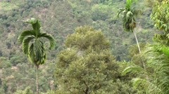 Malaysia Penang island 063 palm trees with hillside in background Stock Footage