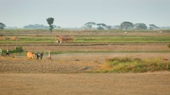 Mon state, burma - circa jan 2013: farmers working in the fields with cows Stock Footage