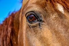 Horse eye close up Stock Photos