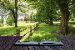 Landscape image of beautiful vibrant lush green forest woodland scene creativ Stock Illustration