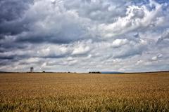 Spike Field Landscape Stock Photos