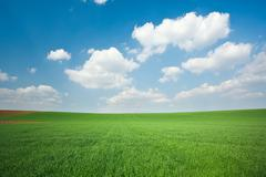 Stock Photo of green wheat field and blue sky