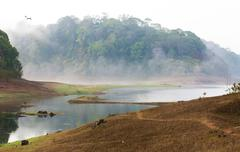 india kumily, kerala, india - national park periyar wildlife sancturary, - stock photo