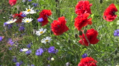 Colorful summer time flower background in garden Stock Footage