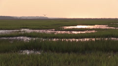 Birds in Marsh at Sunrise - Peaceful Serene Morning - stock footage
