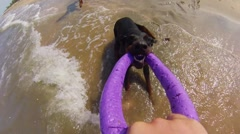 Dog playing with toy in sea Stock Footage