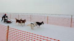 Sled dog racing Stock Footage