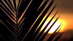 4K Nature Scenic Sun Sets Behind Palm Frond Stock Footage