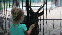 Little girl feeds a Timor deer (Cervus timorensis) in zoo Stock Footage
