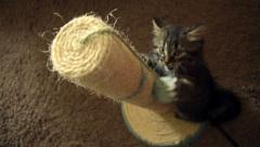 Tabby kitten playing with scratching post Stock Footage