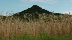 4K Summer Wheat Field and Volcanic Hill in Kali Basin Hunagry 1 Stock Footage