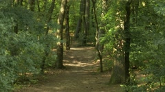 4K Temperate Climate Lush Deciduous Forest at Summer 2 Stock Footage