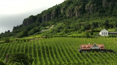 4K Vinery in Badacsony Hungary 1 Stock Footage