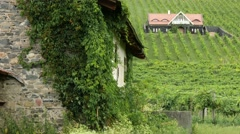 4K Vinery in Badacsony Hungary 2 Stock Footage