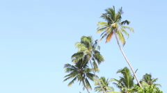 View of the palm trees flowing in the wind in Mirissa, Sri Lanka. Stock Footage