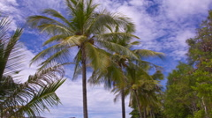 Palm Trees and Clouds. Time Lapse. Stock Footage