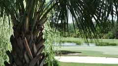 1911 Palm Tree with Golf Course in Background, HD Stock Footage