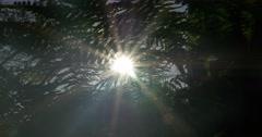 4k, sunbeams through fern, wee and trees Stock Footage