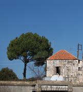 lebanese house and pine tree - stock photo