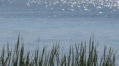 Water surface with patches of sunlight and grass Stock Footage