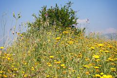 wild flowers shrub - stock photo