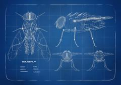 Stock Illustration of Blueprint for a  housefly