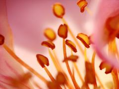 Stock Photo of stamens