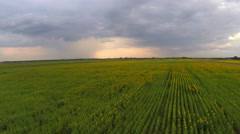 Aerial flight over the wheat field before storm Stock Footage