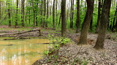 Wallow in the oak spring forest Stock Footage