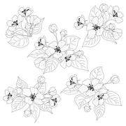 Apple tree flowers and leaves set contours Stock Illustration