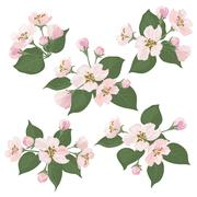Apple tree flowers and green leaves set - stock illustration