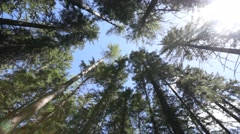 Uplooking POV shot in forest Stock Footage