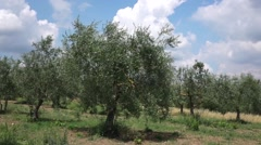Landscape in tuscany, italy Stock Footage