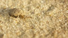 Antlion larva burrows in the sand - macro Stock Footage