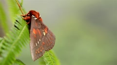 Moth Butterfly resting on plant Stock Footage