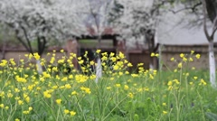Country yard full of spring flowers Stock Footage
