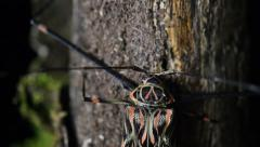 Long Legged Harlequin Beetle Resting On Tree Trunk At night Stock Footage