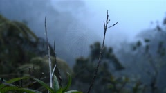 Tropical cloud forest with fog and spider web in Bolivia Stock Footage