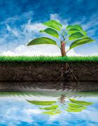 Tree and soil with grass Stock Illustration