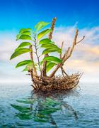 Dead tree floating in the sea Stock Illustration