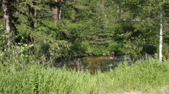 Creek flowing through the Black Hills forest Stock Footage