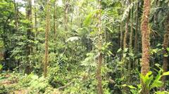 Interior of tropical rainforest in the Ecuadorian Amazon. Stock Footage