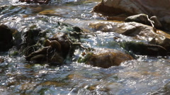 A Creek gently flows over a rocky bed Stock Footage