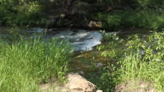 Mountain creek churns through the underbrush Stock Footage