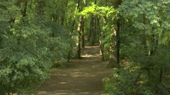 Temperate Climate Lush Deciduous Forest at Summer 1 Stock Footage
